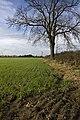 Hayton Field - geograph.org.uk - 1569466.jpg