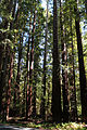 Hendry Woods State Park - Stierch 03.jpg