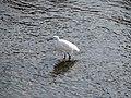 Heron - panoramio (8).jpg