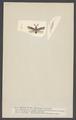 Heterotoma - Print - Iconographia Zoologica - Special Collections University of Amsterdam - UBAINV0274 002 02 0038.tif