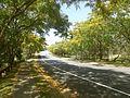 Hickey Way Carrara, Queensland.jpg