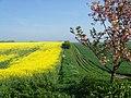 High Hunsley Circuit near Bishop Burton - geograph.org.uk - 796668.jpg