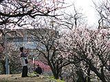 枚岡公園の梅林