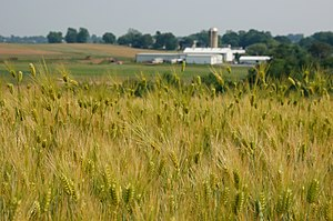Lancaster County, Pennsylvania - A typical field of grain