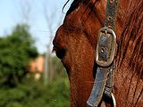 Horse-head-closeup-0A.jpg