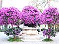 Hotel San Domenico-Taormina-Sicilia-Italy - Creative Commons by gnuckx (3667598410).jpg