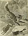 Hunting and trapping stories; a book for boys (1903) (14780123734).jpg