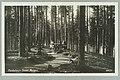 Hynninsaaren kukkulan levähdyspaikka, Alex. F. Lindberg 1910s PK0254.jpg