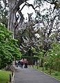 ID 229 Jardín Japones 5430.jpg