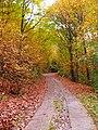 I colori dell'autunno - panoramio.jpg