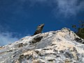 Iguana lurking on the sunny side (4256788855).jpg