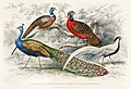 Illustration from A History of the Earth and Animated Nature by Oliver Goldsmith from rawpixel's own original edition of the publication 00056.jpg