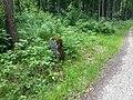 Im Wald bei Haynrode - panoramio (14).jpg