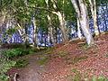 In The Woods at Millbuies - geograph.org.uk - 1347323.jpg