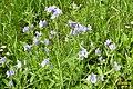 In the Savill Garden 'meadow' (30486636662).jpg
