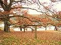 Innisfree Garden, Millbrook, NY - IMG 1622.jpg