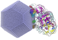 Interaction of acetylcholinesterase with silver nanoparticle.png