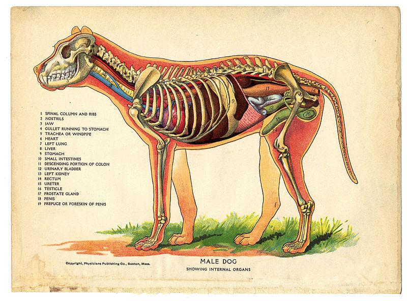 Archivo: Interior de un perro de The Household Physician, 1905 (14354095523) .jpg