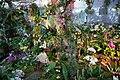 Internationale Orchideen- und Tillandsienschau Blumengärten Hirschstetten 2016 f.jpg