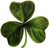 Irish clover.png