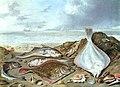 Jan van Kessel 004.jpg