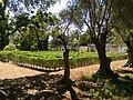 Japan Lane, Japanese Garden, and whereabouts 16.jpg