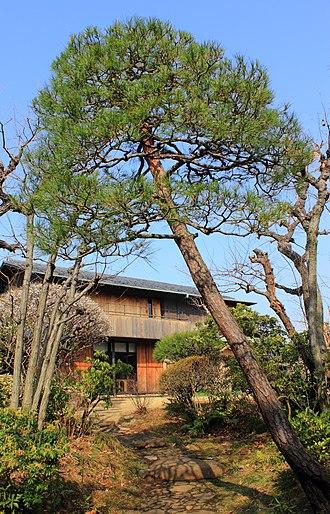 Pinus densiflora - Image: Japanese Red Pine (Japanese garden)