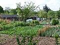 Jardins familiaux4.JPG