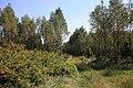 Jesienny spacer - panoramio (8).jpg