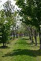 Jeunes bois, merisier, châtaignier, noyer, chêne en fin de printemps..jpg