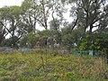 Jewish cemeteries in Chashniki 1a.jpg