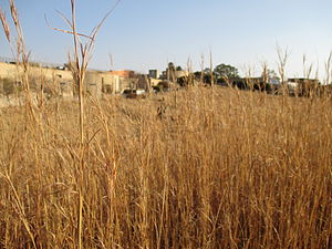 Suburbs of Johannesburg - A park near Ormonde, Johannesburg South.