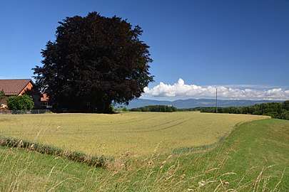 Jorat parc. View from Grange Neuve in direction of Gros-de-Vaud and Jura mountains.jpg