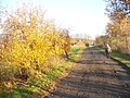 Jueterbog - Bei Gut Waldau (Near Waldau Manor) - geo.hlipp.de - 30385.jpg