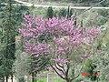 Kουτσουπιά - panoramio.jpg