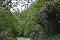 Killarney National Park, Ring of Kerry (506626) (28227119576).jpg