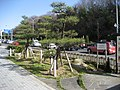 Kotowari-no-matsu - panoramio.jpg