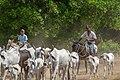 LLaneros en Apure, Venezuela.jpg