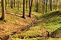 L 57 Stormsdorfer Bachtal (Wolfsberger Wald) (1) - typisch Buchen Wald leicht bergig.jpg