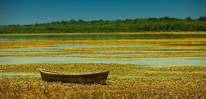 File:Lacul Beleu, Rezervația științifică Prutul de Jos 02.jpg