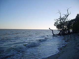 The largest and one of biologically the richest tidal lagoons located entirely on the Gulf Coast of Mexico