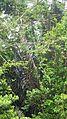 Laika ac Iguana (7359681278).jpg