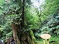 Lalashan Forest Reserve 拉拉山國有林自然保護區 - panoramio.jpg