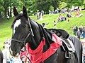 Lancers Horse. - panoramio.jpg