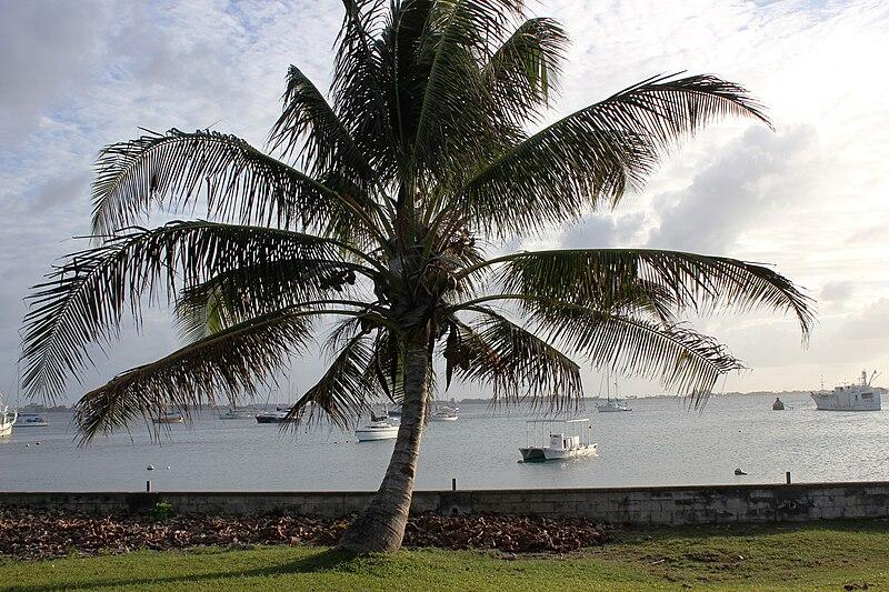 Landscape, Majuro, Marshall Islands, February 2012. Photo- Erin Magee - DFAT (12426188673).jpg
