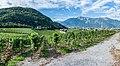 Landscape in Aigle (1).jpg