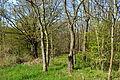 Landschaftsschutzgebiet Röderhofer Teiche und Egenstedter Forst - Sonnenberg-Wäldchen (5).JPG