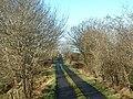 Lane between Malin Town and Templemoyle, Inishowen - geograph.org.uk - 125296.jpg