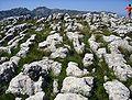 Lapiaz-Limestone Pavement.jpg