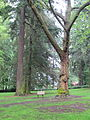 Laurelhust Park, Portland, OR, May 21, 2012.JPG